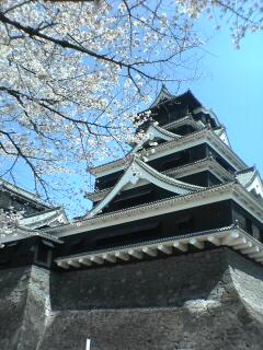 満開の熊本城