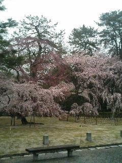 桜コレクション2
