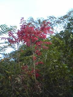 ほんのり紅葉