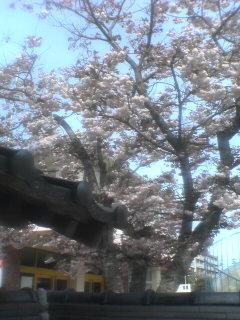 桜餅を連想