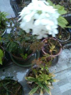 秋のベランダ菜園