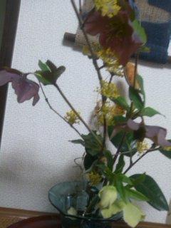差し入れのお花