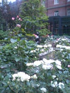 バラが綺麗な庭