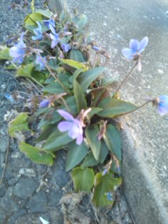 春がすぐそこ