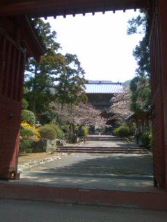 桜と東光寺