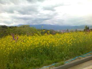 花見山より