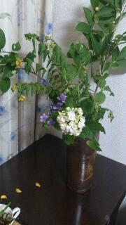 初夏のお花