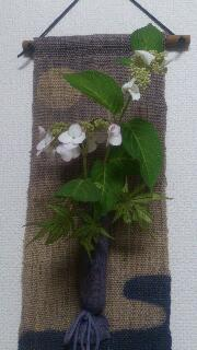 紫陽花とアオカエデ