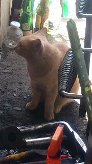 銭湯近くの猫