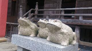 神社のカエル