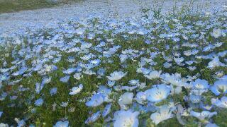 青い絨毯2