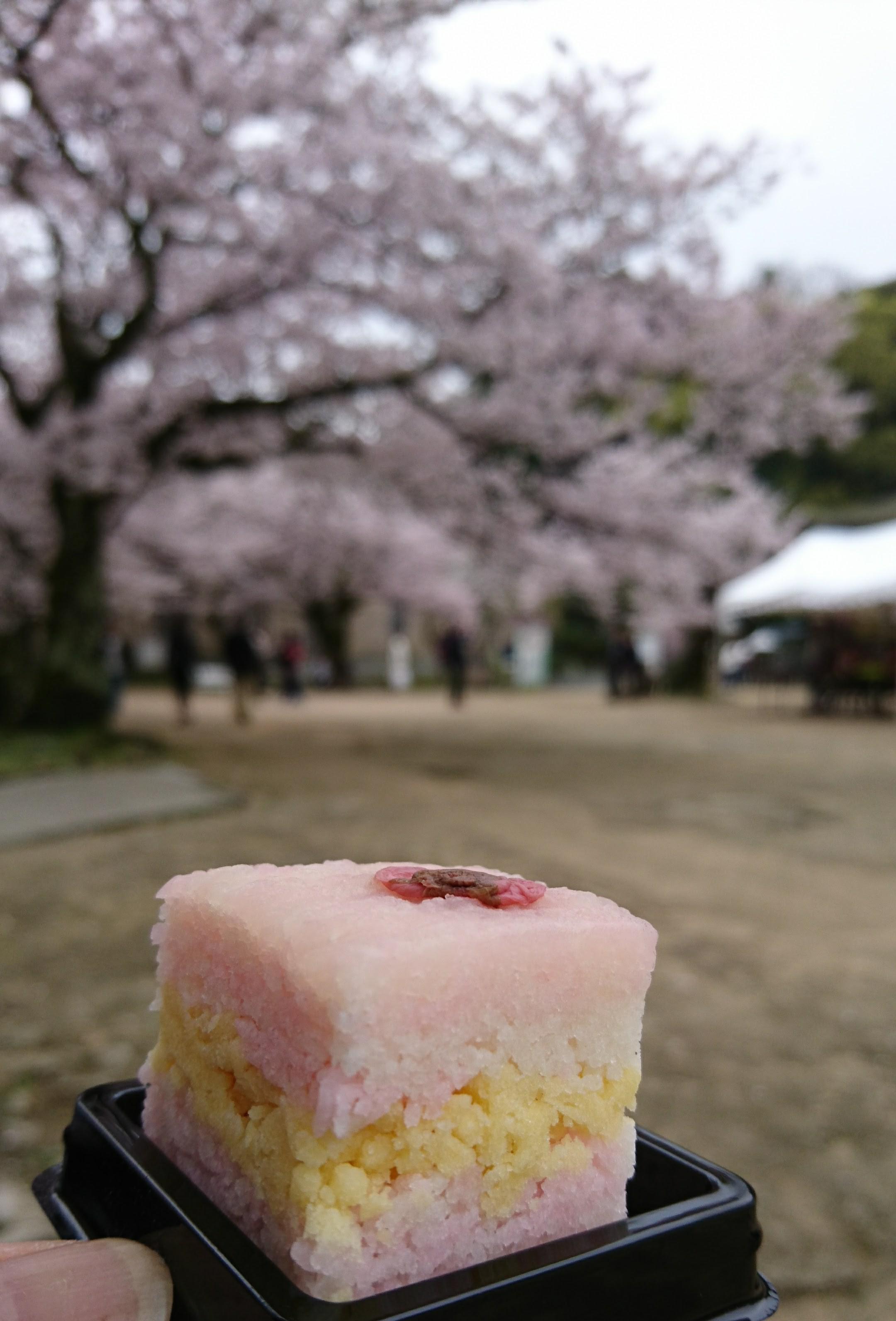 和菓子と桜